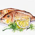 Dorado Fish by Irina Gromovaja