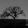 Dormant Tree On Hill by B Christopher