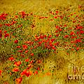 Dots Of Red by Brothers Beerens