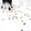 Dots by Yue Wang