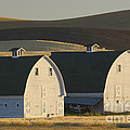 Double Barns by John Shaw