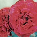 Double Desert  Red Roses by Dusty Rose