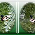 Double Duck by Schnina Walker