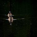 Double Goose by Karol Livote