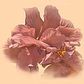 Double Hibiscus Portrait by Gene Norris