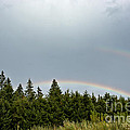 Double Rainbow by Cheryl Baxter