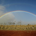 Double Rainbow Over A Field In Maui by Stocktrek Images
