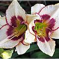 Double The Bloom by Elizabeth Winter