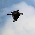 Dougherty Iowa Eagles 4 by Bonfire Photography