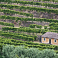 Douro Valley Vineyards by Eggers Photography
