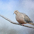 Dove In The Snow by Jai Johnson
