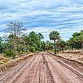 Down Chisolm Island Road by Scott Hansen