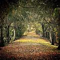 Down The Lane by Gail Falcon