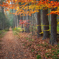 Down The Trail by Bill Wakeley