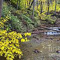 Downstream Blue Hen Falls by Denny Beck