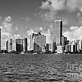Downtown Miami by Eyzen M Kim