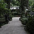 Downward Sloping Part Inside The National Orchid Garden In Singapore by Ashish Agarwal