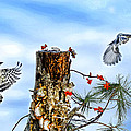 Downy And Titmouse Playing On Lichen Stump by Randall Branham