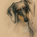 Doxie by Cori Solomon