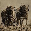 Draft Horses by Dan Sproul