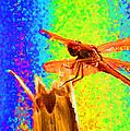 Dragon Fly- Creative by Miguel Hernandez
