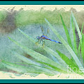 Dragon Fly by Donna Bentley