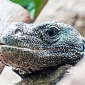 Dragon Lizzard Portrait Closeup by Alex Grichenko