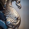 Dragon Right by Ronald Grogan