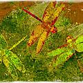 Dragonflies Abound by Jack Zulli