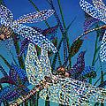 Dragonflies by Erika Pochybova
