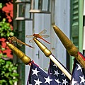 Dragonflies In Full Salute by Nancy Patterson