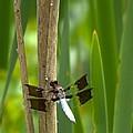 Dragonfly 2014 by John Feiser