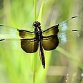 Dragonfly 9249 by Bonfire Photography