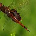 Dragonfly Art 2 by Greg Patzer