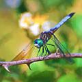 Dragonfly Art - A Thorny Situation by Kerri Farley