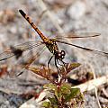 Dragonfly by Dan Williams