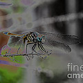 Dragonfly by Donna Brown