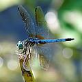 Dragonfly Elegance by Charles Feagans