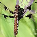 Dragonfly by Emma England