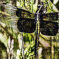 Dragonfly Essence by Barry Jones