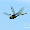 Dragonfly Flight  by Neal Eslinger