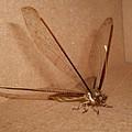 Dragonfly by Florentina De Carvalho