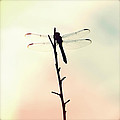 Dragonfly II by Chris Andruskiewicz