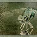 Dragonfly II by WB Johnston