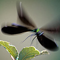 Dragonfly In Flight by George Atsametakis