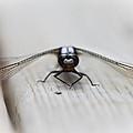 Dragonfly by Jakub Sisak
