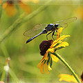 Dragonfly by Karen Beasley