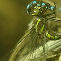 Dragonfly Macro  by Jeff Swan