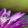 Dragonfly Macro On A Water Lily by Brandon Alms