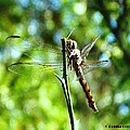 Dragonfly Magic by Donna Cook